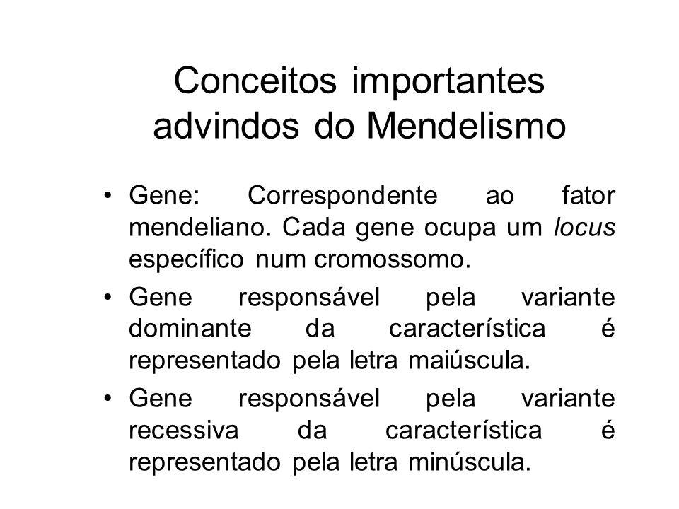Conceitos importantes advindos do Mendelismo Gene: Correspondente ao fator mendeliano. Cada gene ocupa um locus específico num cromossomo. Gene respon