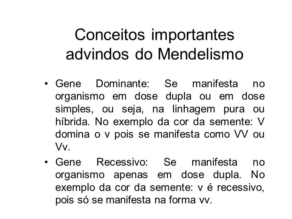 Conceitos importantes advindos do Mendelismo Gene Dominante: Se manifesta no organismo em dose dupla ou em dose simples, ou seja, na linhagem pura ou