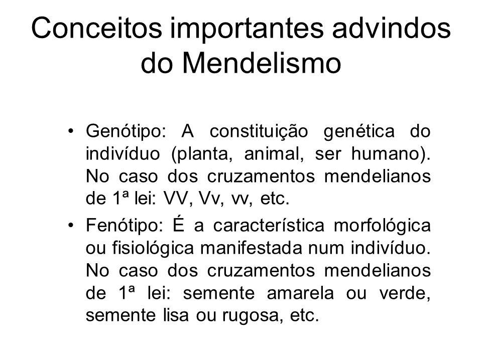 Conceitos importantes advindos do Mendelismo Genótipo: A constituição genética do indivíduo (planta, animal, ser humano). No caso dos cruzamentos mend