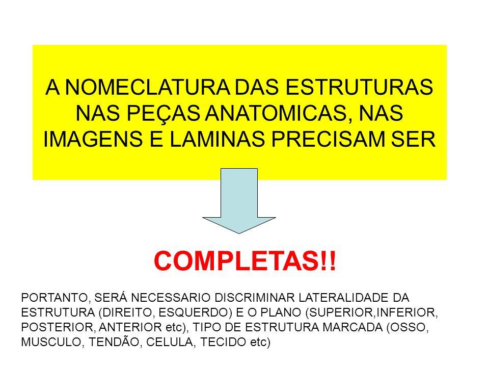 A NOMECLATURA DAS ESTRUTURAS NAS PEÇAS ANATOMICAS, NAS IMAGENS E LAMINAS PRECISAM SER COMPLETAS!! PORTANTO, SERÁ NECESSARIO DISCRIMINAR LATERALIDADE D