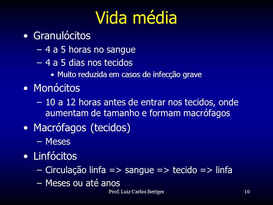 Prof. Luiz Carlos Bertges10 Vida média Granulócitos –4 a 5 horas no sangue –4 a 5 dias nos tecidos Muito reduzida em casos de infecção grave Monócitos