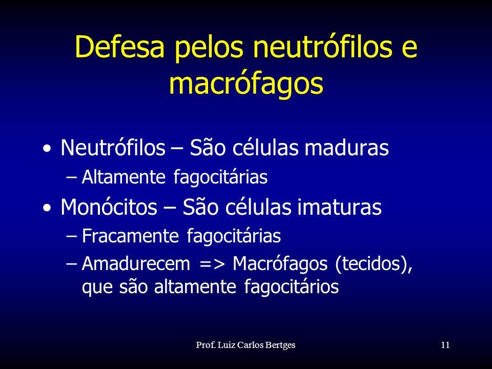 Prof. Luiz Carlos Bertges11 Defesa pelos neutrófilos e macrófagos Neutrófilos – São células maduras –Altamente fagocitárias Monócitos – São células im