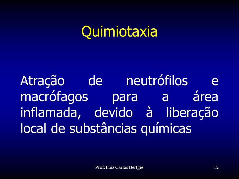 Prof. Luiz Carlos Bertges12 Quimiotaxia Atração de neutrófilos e macrófagos para a área inflamada, devido à liberação local de substâncias químicas