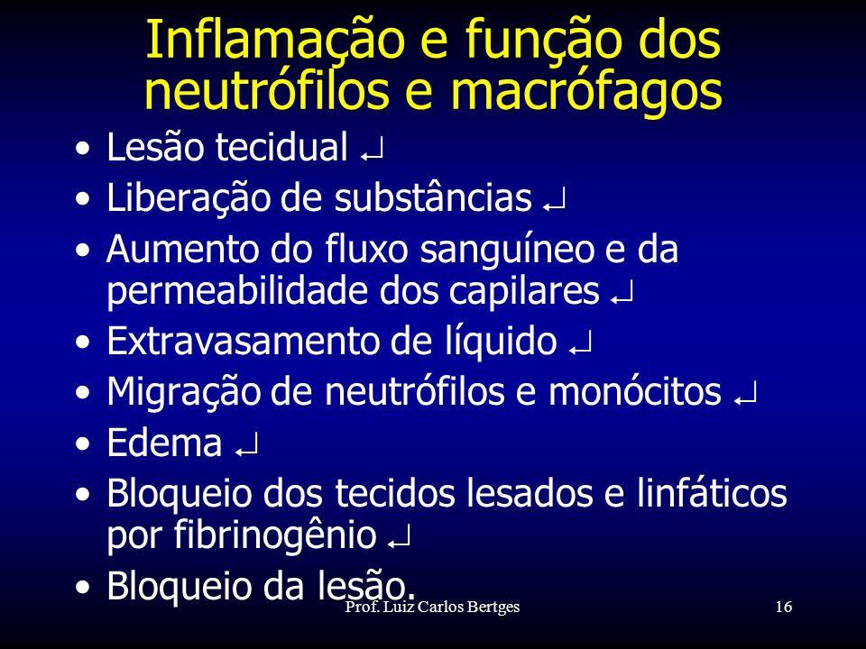 Prof. Luiz Carlos Bertges16 Inflamação e função dos neutrófilos e macrófagos Lesão tecidual Liberação de substâncias Aumento do fluxo sanguíneo e da p