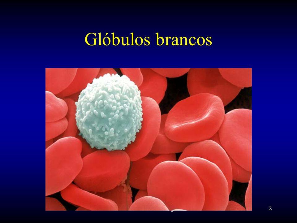 Prof. Luiz Carlos Bertges2 Glóbulos brancos