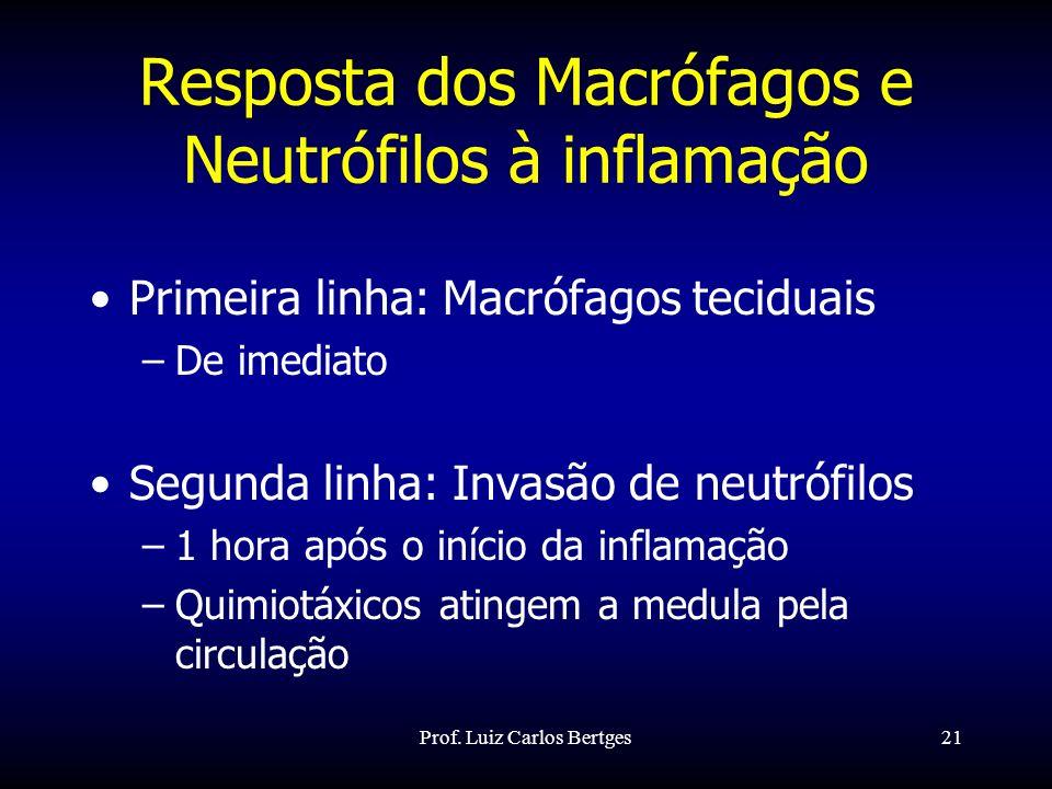 Prof. Luiz Carlos Bertges21 Resposta dos Macrófagos e Neutrófilos à inflamação Primeira linha: Macrófagos teciduais –De imediato Segunda linha: Invasã