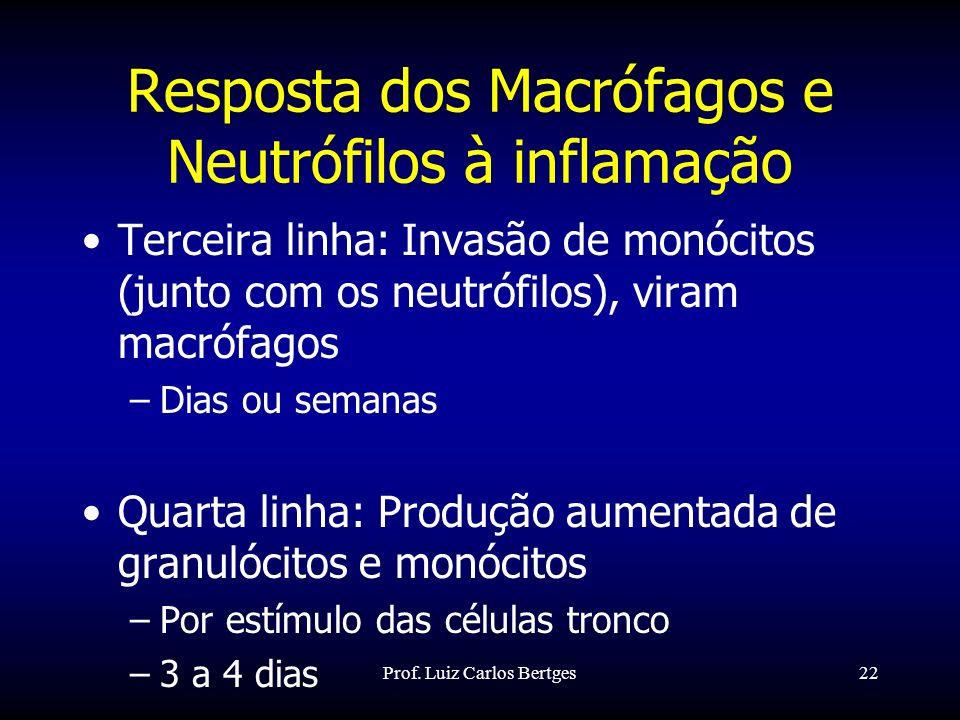 Prof. Luiz Carlos Bertges22 Resposta dos Macrófagos e Neutrófilos à inflamação Terceira linha: Invasão de monócitos (junto com os neutrófilos), viram