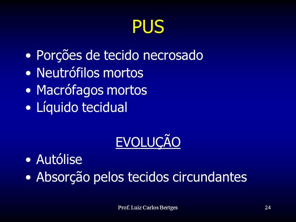 Prof. Luiz Carlos Bertges24 PUS Porções de tecido necrosado Neutrófilos mortos Macrófagos mortos Líquido tecidual EVOLUÇÃO Autólise Absorção pelos tec