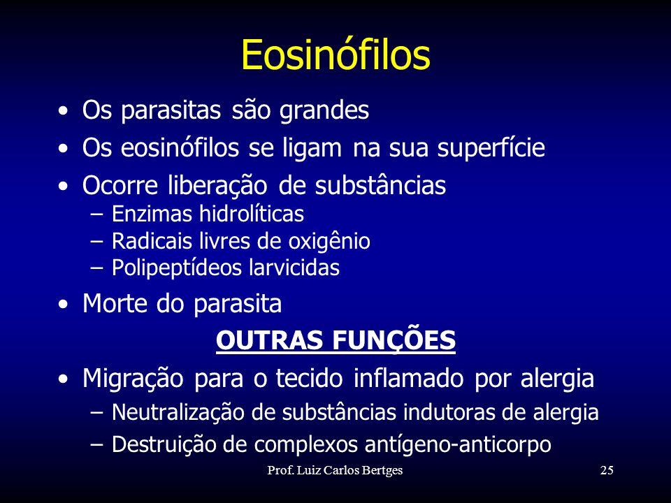 Prof. Luiz Carlos Bertges25 Eosinófilos Os parasitas são grandes Os eosinófilos se ligam na sua superfície Ocorre liberação de substâncias –Enzimas hi