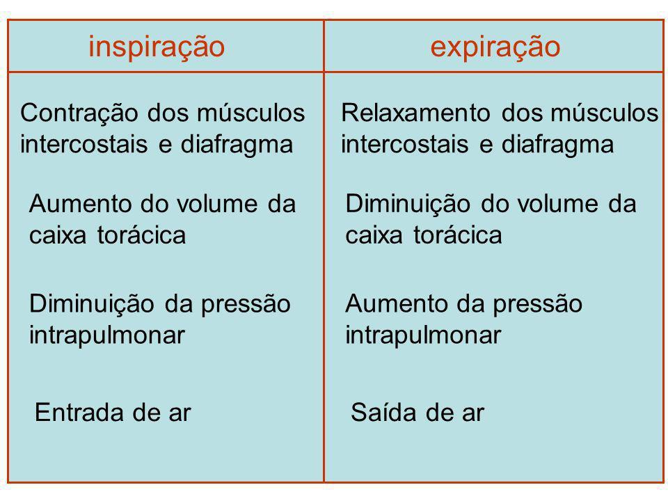 inspiraçãoexpiração Contração dos músculos intercostais e diafragma Aumento do volume da caixa torácica Diminuição da pressão intrapulmonar Entrada de