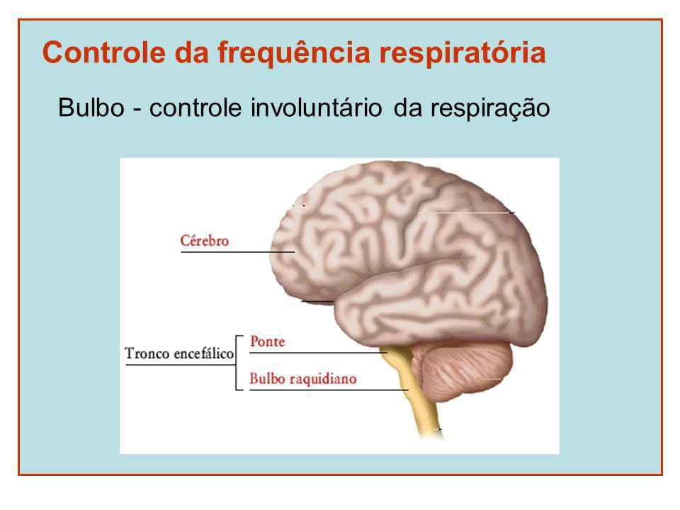 Controle da frequência respiratória Bulbo - controle involuntário da respiração