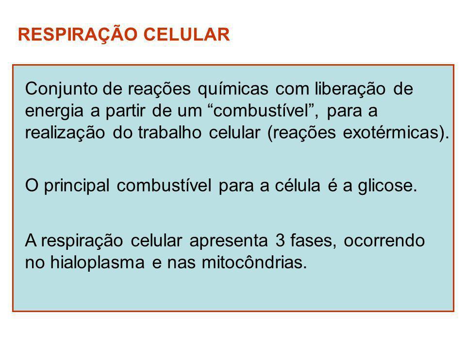 Fases da respiração celular Glicólise (hialoplasma) C 6 H 12 O 6 2 ác.
