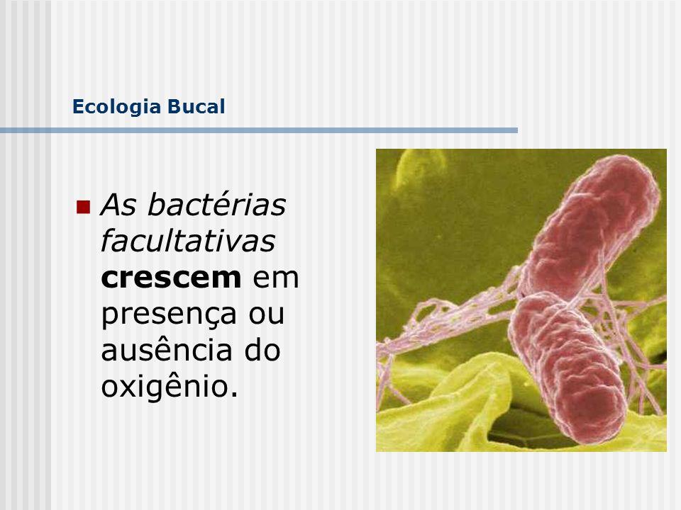 Ecologia Bucal As bactérias facultativas crescem em presença ou ausência do oxigênio. 105