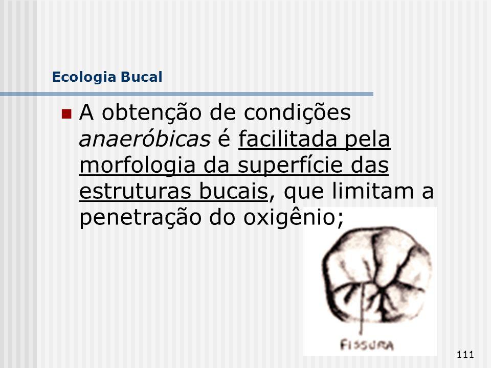 111 Ecologia Bucal A obtenção de condições anaeróbicas é facilitada pela morfologia da superfície das estruturas bucais, que limitam a penetração do o