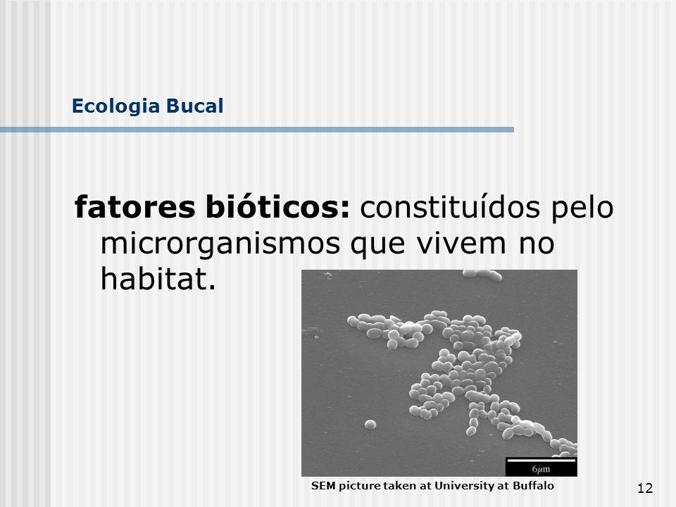 12 Ecologia Bucal fatores bióticos: constituídos pelo microrganismos que vivem no habitat. SEM picture taken at University at Buffalo