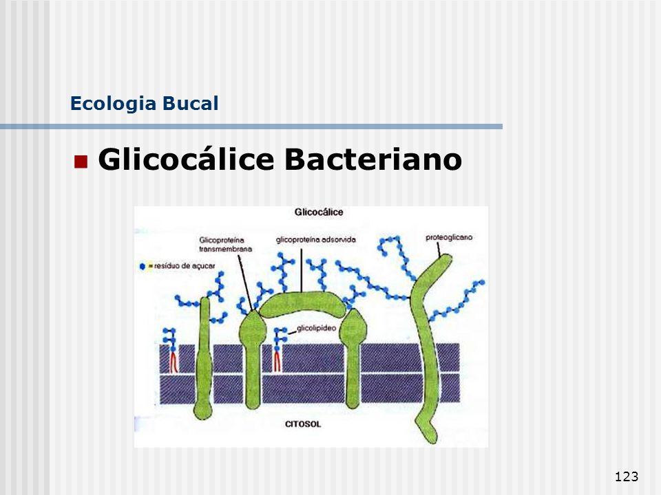 123 Ecologia Bucal Glicocálice Bacteriano