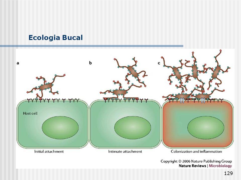 129 Ecologia Bucal