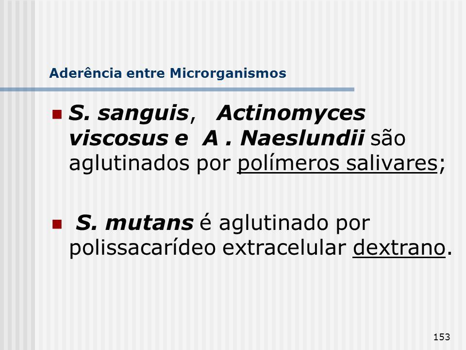 153 Aderência entre Microrganismos S. sanguis, Actinomyces viscosus e A. Naeslundii são aglutinados por polímeros salivares; S. mutans é aglutinado po