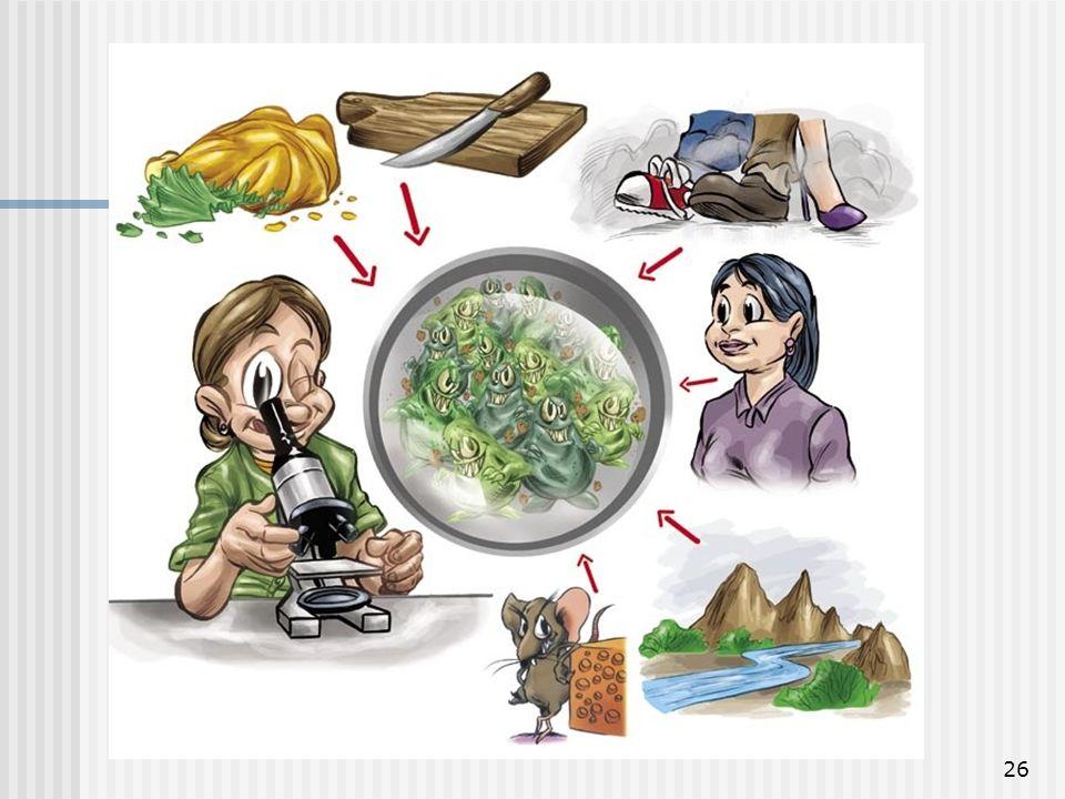 26 Ecologia Bucal