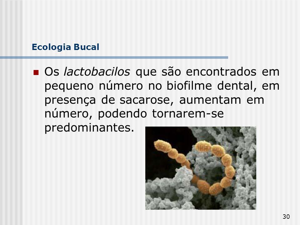 30 Ecologia Bucal Os lactobacilos que são encontrados em pequeno número no biofilme dental, em presença de sacarose, aumentam em número, podendo torna