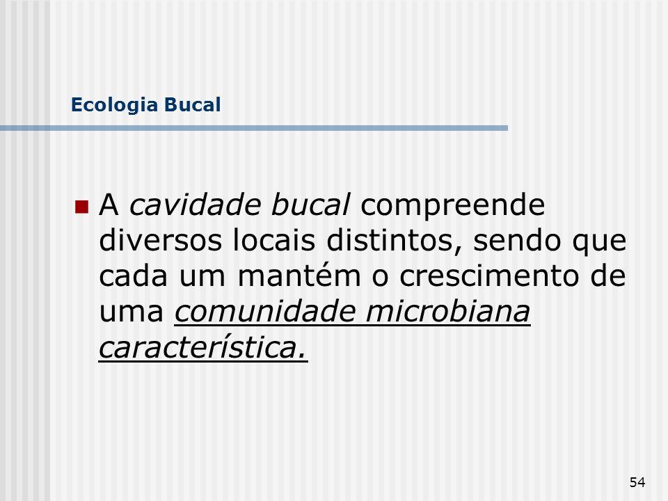 54 Ecologia Bucal A cavidade bucal compreende diversos locais distintos, sendo que cada um mantém o crescimento de uma comunidade microbiana caracterí
