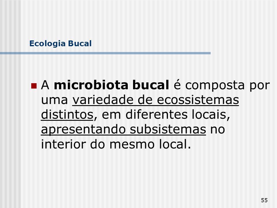 55 Ecologia Bucal A microbiota bucal é composta por uma variedade de ecossistemas distintos, em diferentes locais, apresentando subsistemas no interio