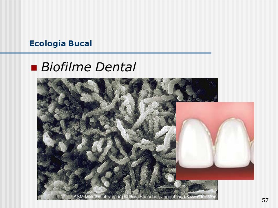 57 Ecologia Bucal Biofilme Dental