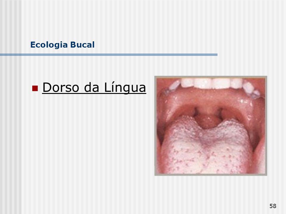 58 Ecologia Bucal Dorso da Língua