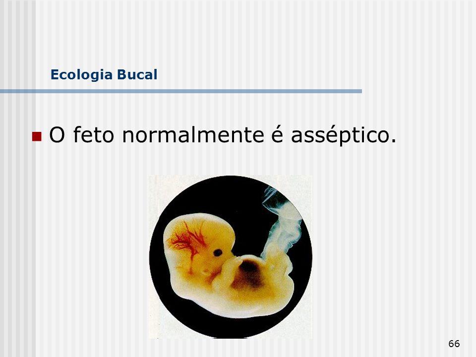 66 Ecologia Bucal O feto normalmente é asséptico.