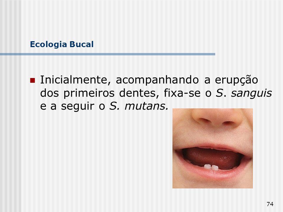 74 Ecologia Bucal Inicialmente, acompanhando a erupção dos primeiros dentes, fixa-se o S. sanguis e a seguir o S. mutans.