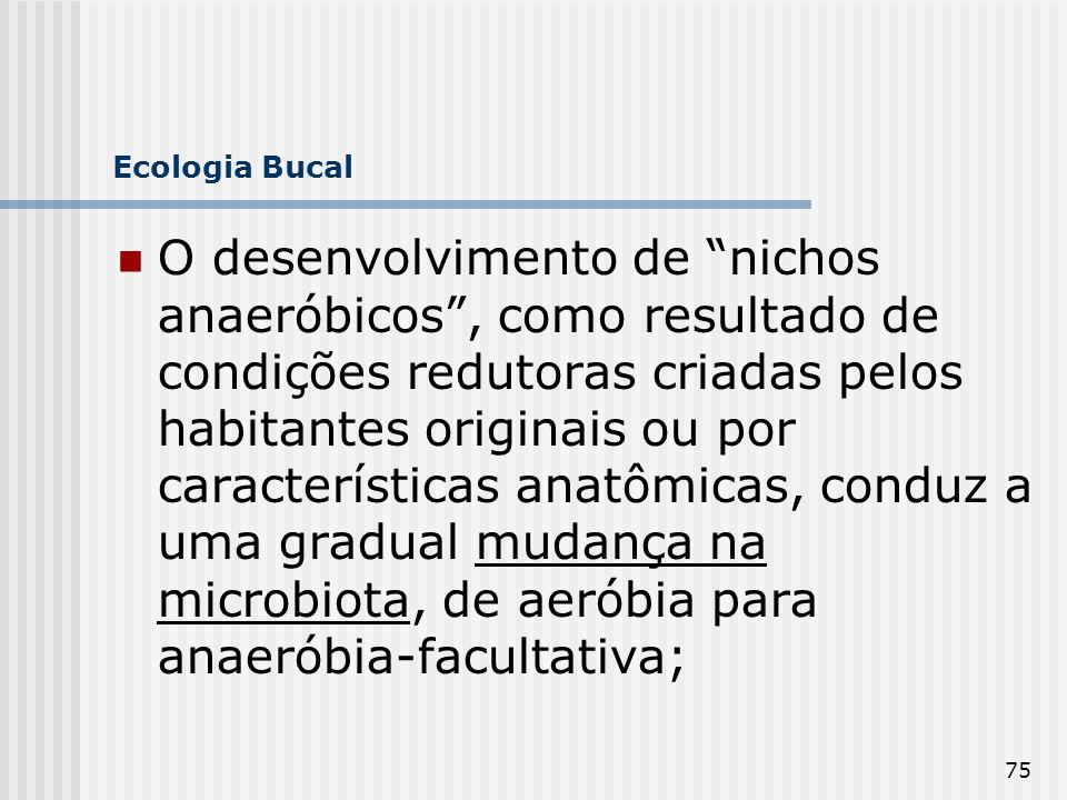 75 Ecologia Bucal O desenvolvimento de nichos anaeróbicos, como resultado de condições redutoras criadas pelos habitantes originais ou por característ