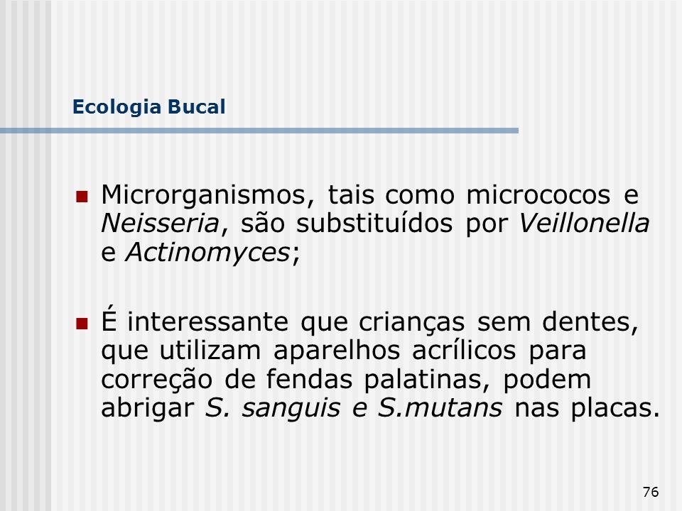 76 Ecologia Bucal Microrganismos, tais como micrococos e Neisseria, são substituídos por Veillonella e Actinomyces; É interessante que crianças sem de