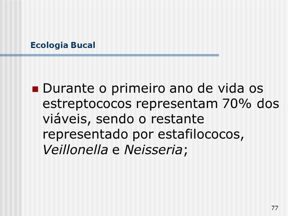 77 Ecologia Bucal Durante o primeiro ano de vida os estreptococos representam 70% dos viáveis, sendo o restante representado por estafilococos, Veillo