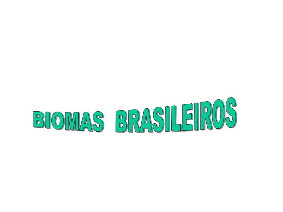 * Entre a floresta Amazônica e a caatinga: * Estados do Maranhão e do Piauí e norte do Tocantins; No oeste, (clima equatorial da Amazônia, + úmida é freqüente o babaçu- palmeiras- com 15 a 20 m de altura).