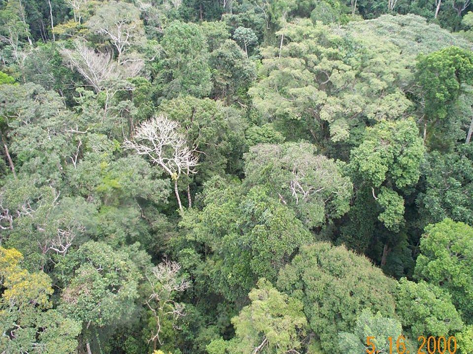 A floresta Amazônica é responsável pela existência de uma massa de ar continental úmida. · A Amazônia não é o pulmão do mundo, pois todo o oxigênio lá