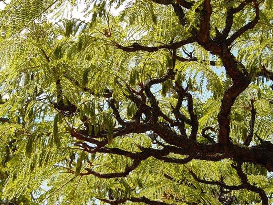 CERRADOS * 2º > bioma - ocupa cerca de 22% do território nacional, nos estados de Minas Gerais, Mato Grosso, Goiás, partes menores em São Paulo, Paran