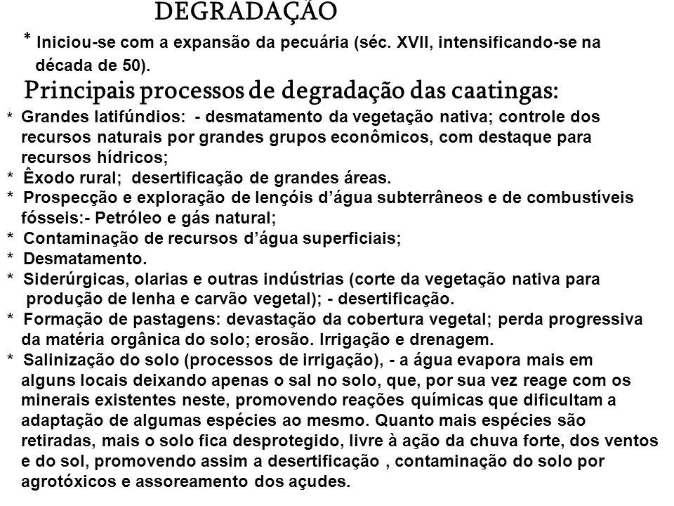 CAATINGA * Estende-se pelo nordeste oriental (sul do Piauí e norte de Minas Gerais). * Clima semi-árido, chuvas irregulares,estações do ano não muito