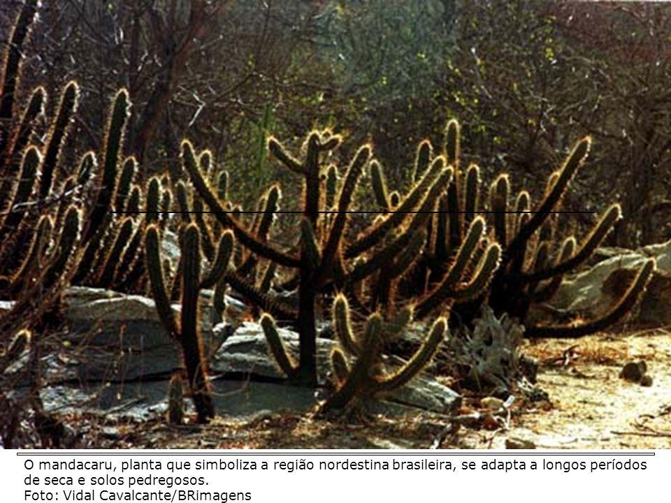 DEGRADAÇÃO * Iniciou-se com a expansão da pecuária (séc. XVII, intensificando-se na década de 50). Principais processos de degradação das caatingas: *