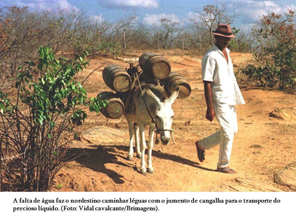 O mandacaru, planta que simboliza a região nordestina brasileira, se adapta a longos períodos de seca e solos pedregosos. Foto: Vidal Cavalcante/BRima