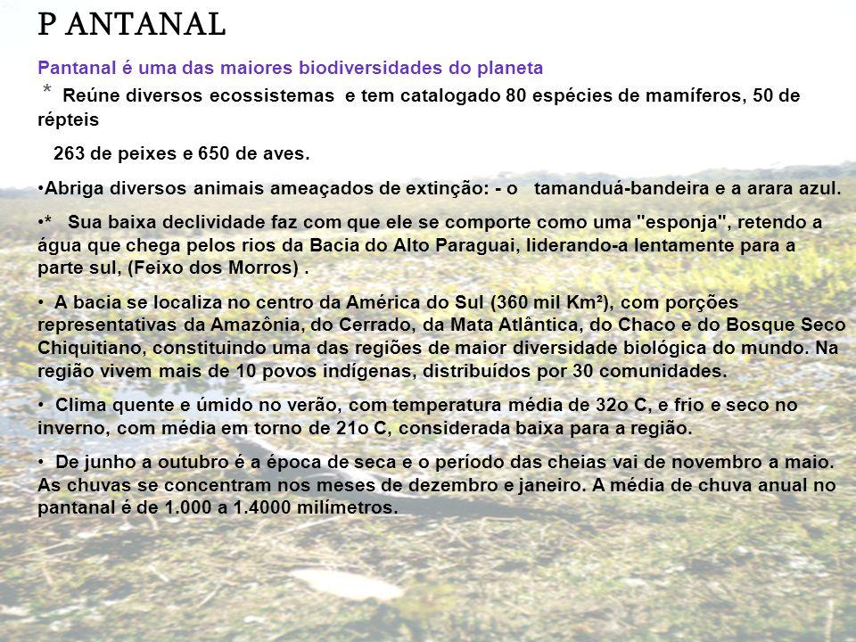 PANTANAL Pantanal é uma das maiores biodiversidades do planeta * Reúne diversos ecossistemas e tem catalogado 80 espécies de mamíferos, 50 de répteis;