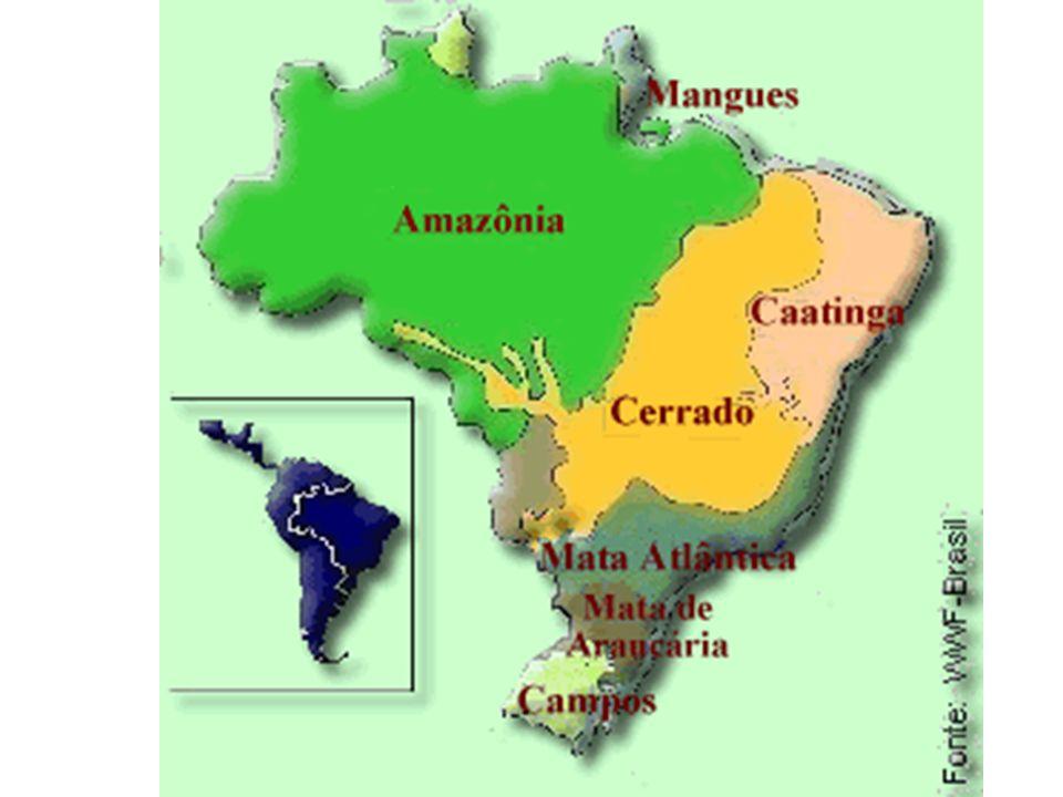 TIPOS VEGETACIONAIS DO BRASIL * 2 grandes conjuntos: um florestal, que ocupa mais de 60% do território nacional, e outro campestre. * Formações Flores
