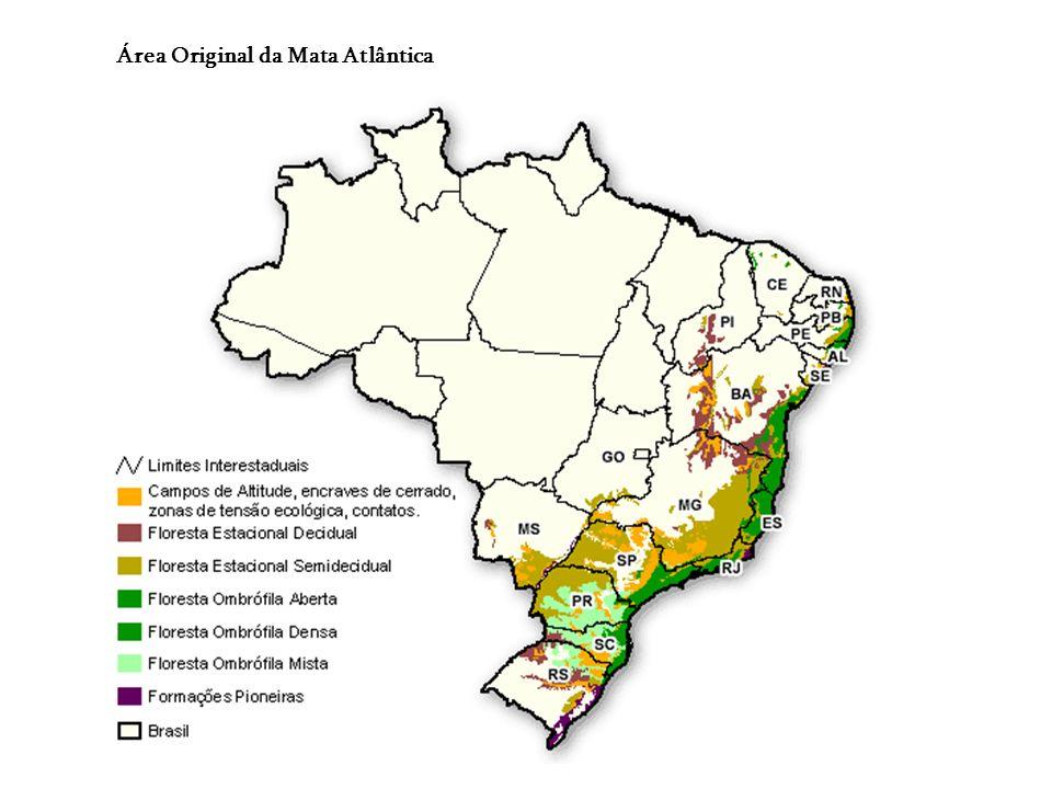 MATA ATLÂNTICA Cobria 1.000.000 Km², da costa do Rio Grande do Norte ao Rio Grande do Sul. Reúne formações vegetais diversificadas e heterogêneas: 3 t