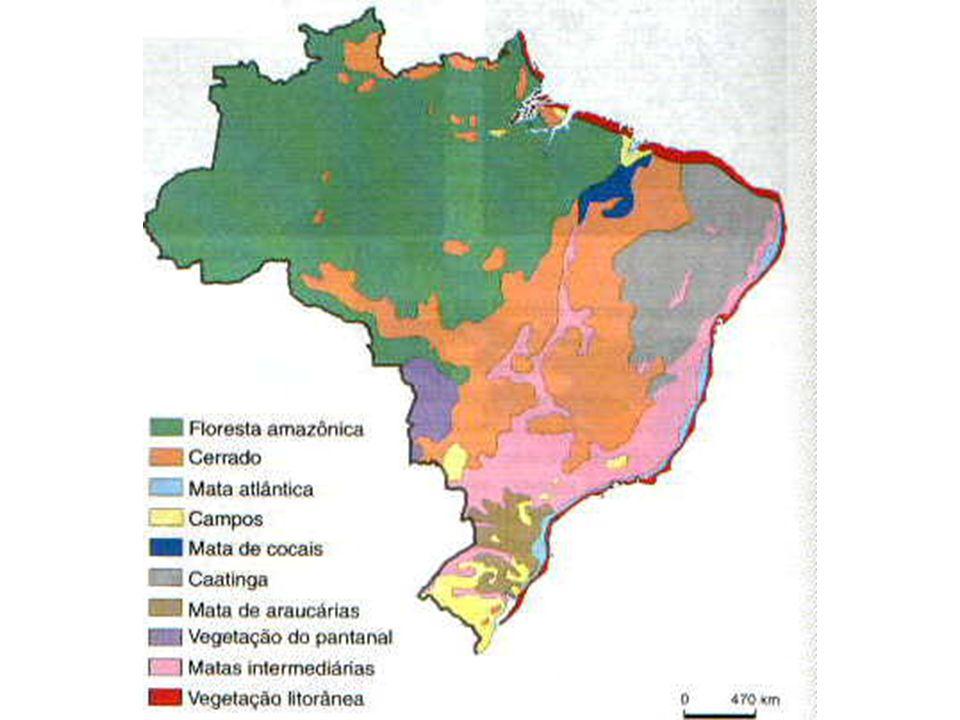 B I O M A S B R A S I L E I R O S Utilizando o mapa abaixo, clique no Bioma e leia as informações referentes no espaço ao lado.