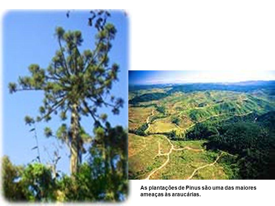 Regiões de grande importância para a criação de Unidades de Conservação e corredores ecológicos, interligando os principais fragmentos.