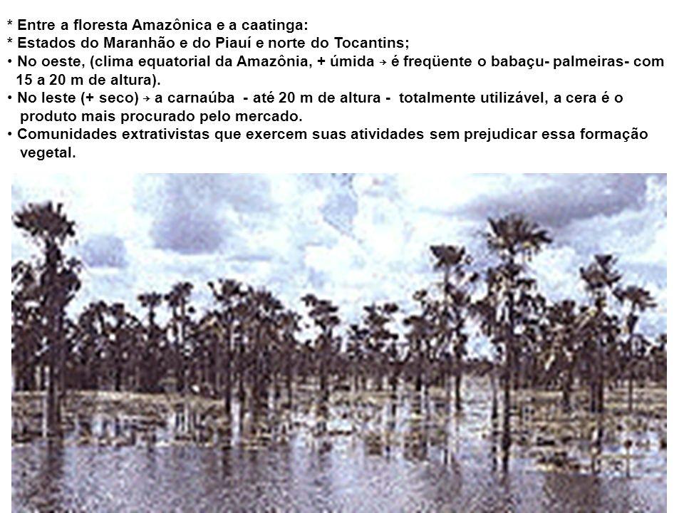 ZONAS DE TRANSIÇÃO * Algumas zonas com características específicas existentes entre biomas brasileiros. ZONA DOS COCAIS * Rio Grande do Norte, Ceará,