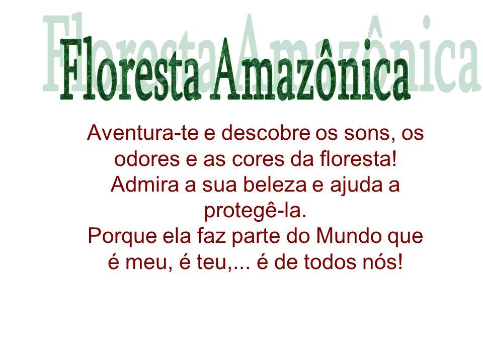 Aventura-te e descobre os sons, os odores e as cores da floresta.