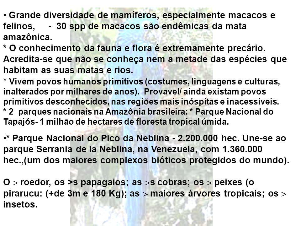 Grande diversidade de mamíferos, especialmente macacos e felinos, - 30 spp de macacos são endêmicas da mata amazônica.