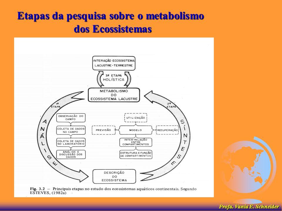 Etapas da pesquisa sobre o metabolismo dos Ecossistemas Profa. Vania E. Schneider