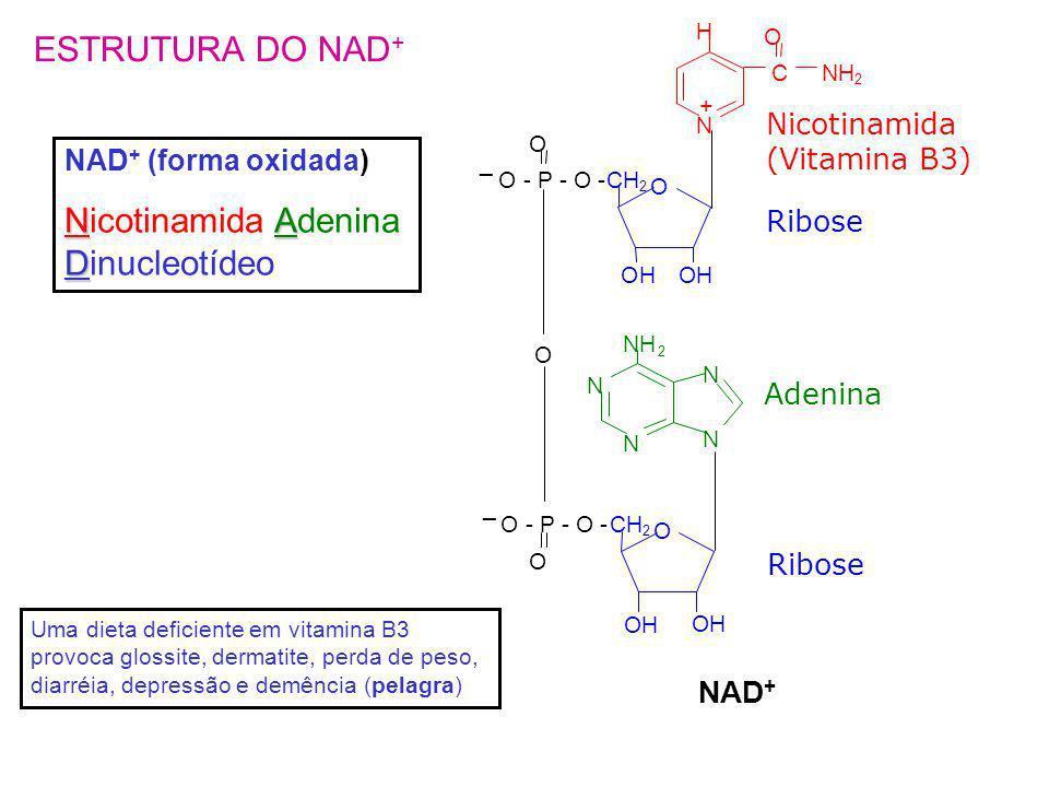 N H + C O NH 2 Nicotinamida (Vitamina B3) CH 2 OH O OH O - P - O - O _ O N N N N NH 2 CH 2 OH O O - P - O - _ O Ribose Adenina OH NAD + ESTRUTURA DO N