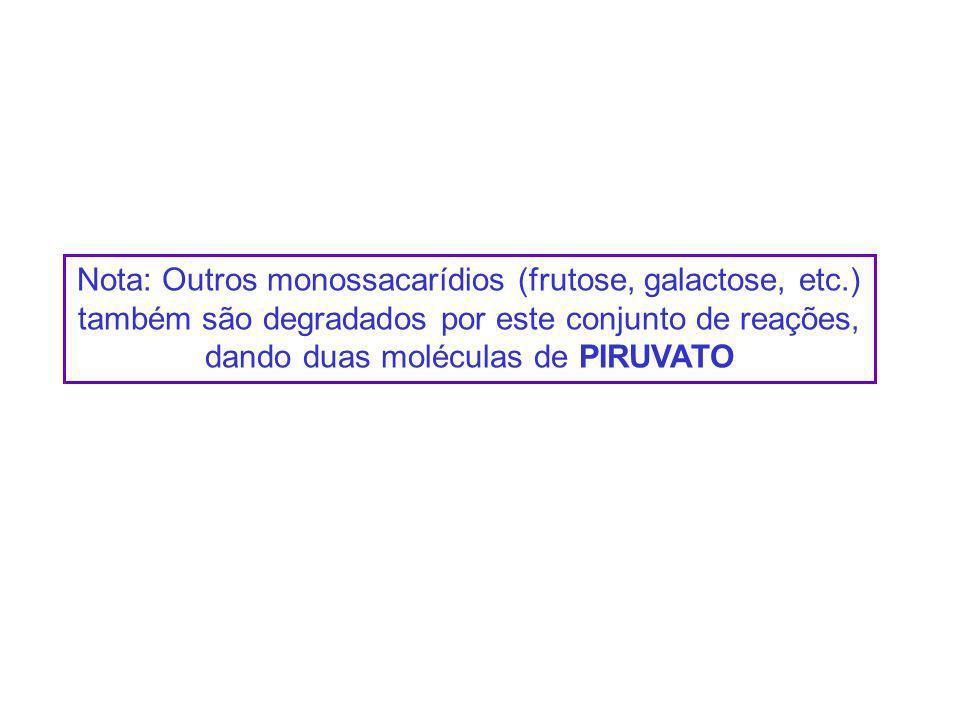 Nota: Outros monossacarídios (frutose, galactose, etc.) também são degradados por este conjunto de reações, dando duas moléculas de PIRUVATO